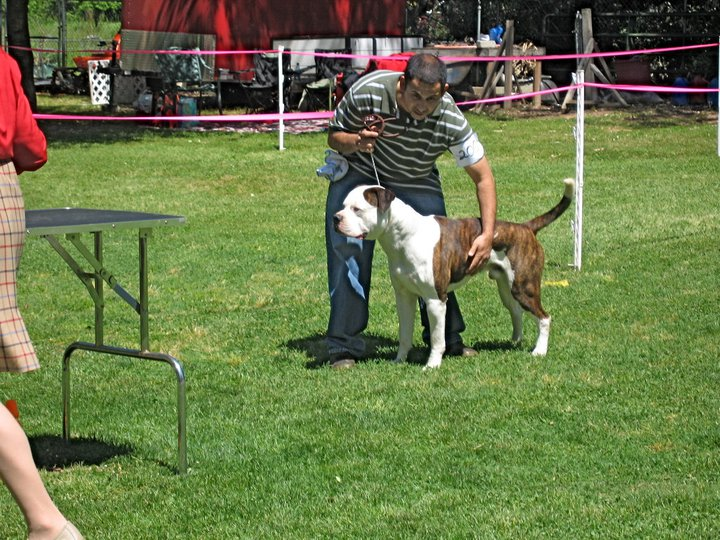Troy in the Show ring II